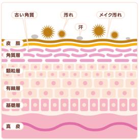 鼻の角栓の肌構造