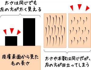 ①毛は根元が太く先端は細いため剃ると太く見える-2