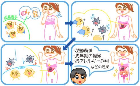 プラセンタサプリで様々な効果が得られるメカニズム