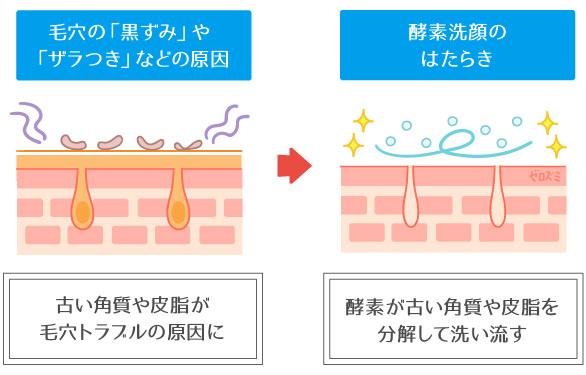 酵素洗顔の働き